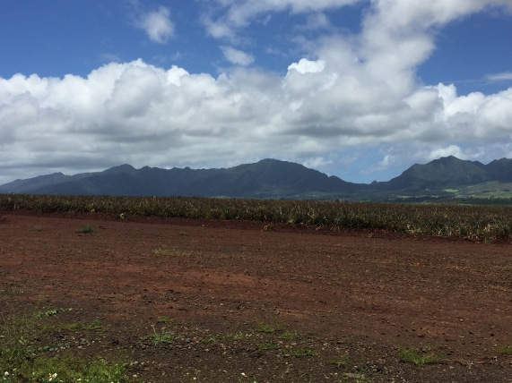 Pineapple Field Oahu HI 2016